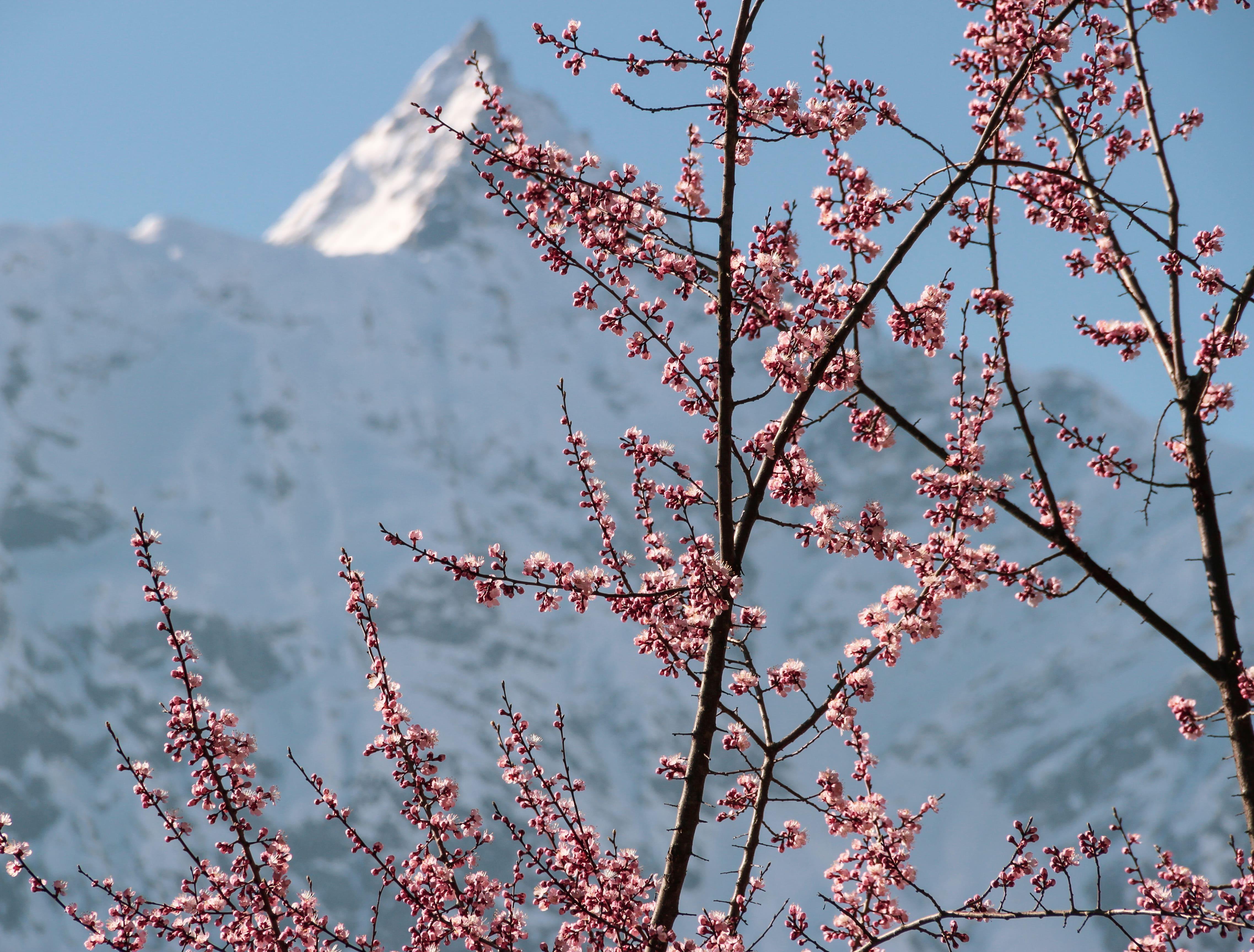 Weather in Kalpa